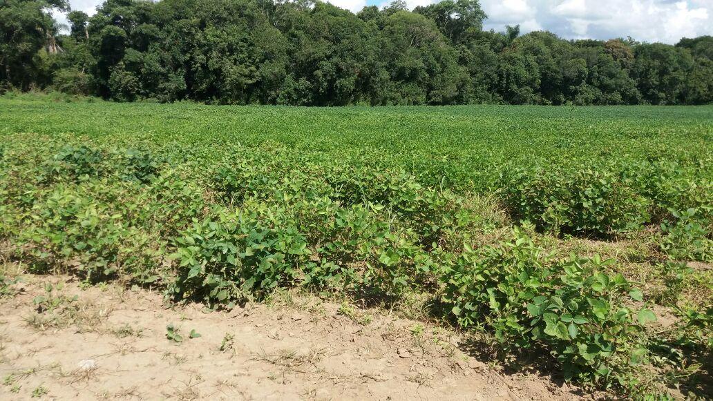 Terreno de planta no Rio do Poço