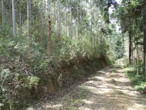 Terreno em Barreiros